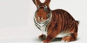 Un tigre-conejo