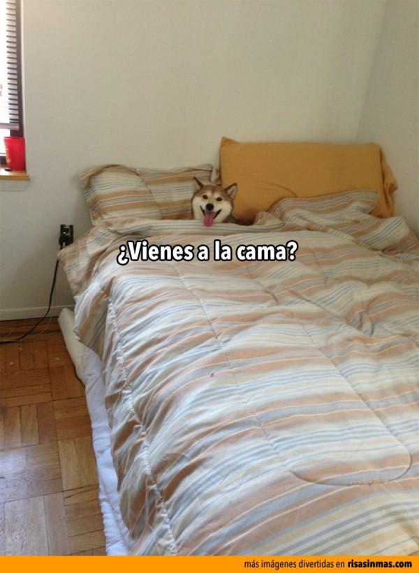 ¿Vienes a la cama?