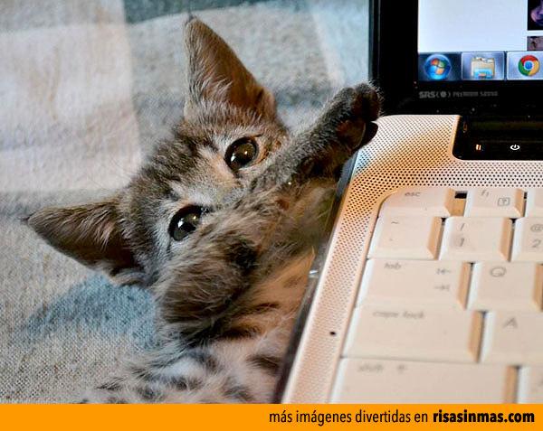 Creo que tu gato quiere llamar tu atención