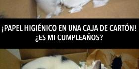 ¿Es mi cumpleaños?