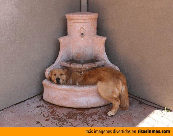 Ducha refrescante en una fuente