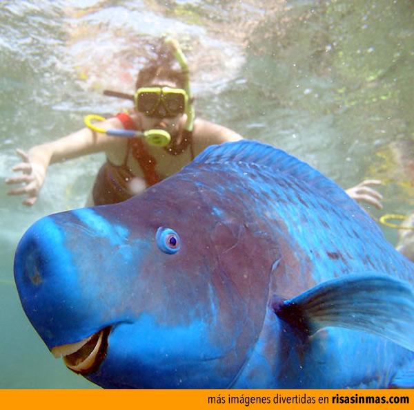 La fotobomba del pez loro