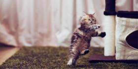 Gatito bailando Zumba
