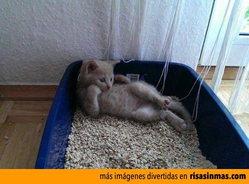 Gatito posando