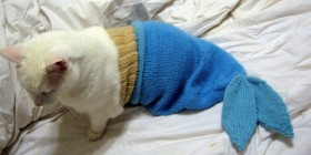 Gato disfrazado de pez