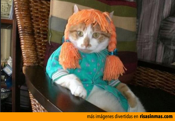 Gato disfrazado de Pippi Calzaslargas
