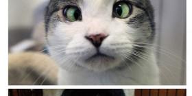 Gatos bizcos