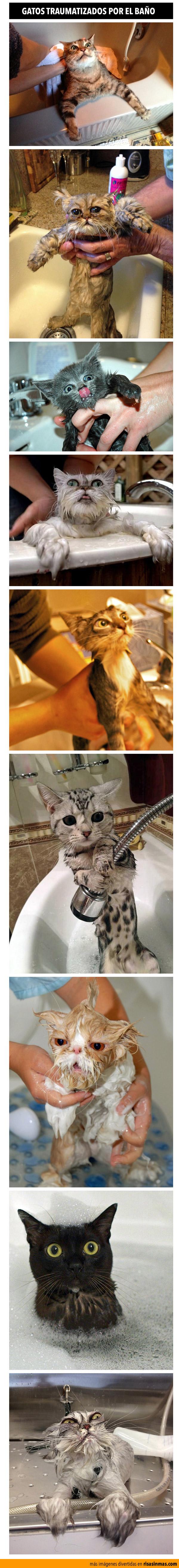 Gatos traumatizados por el baño