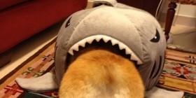 Mi perro devorado por un tiburón
