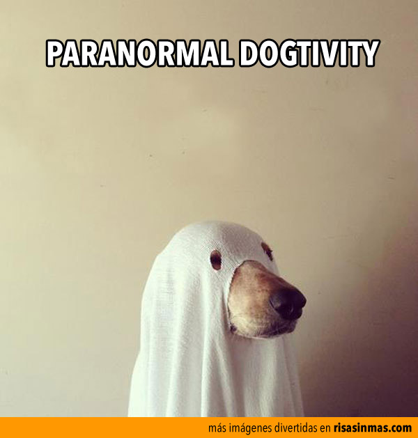 Paranormal dogtivity