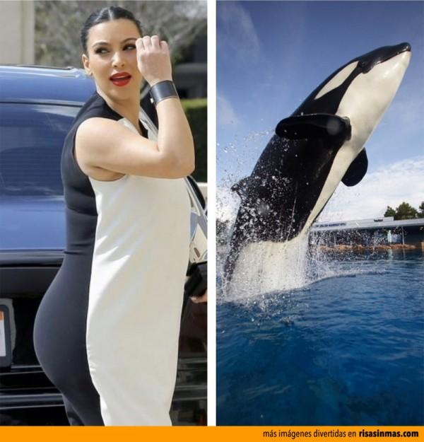 Parecidos Razonables: Kim Kardashian y Orca