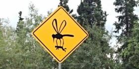 PELIGRO: mosquitos