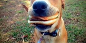 Simplemente un perro feliz