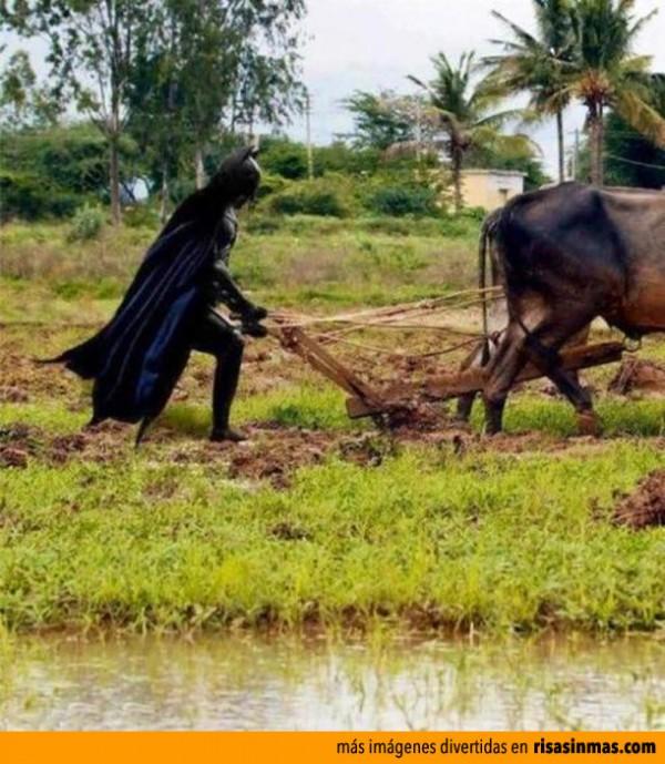 Batman trabajando en el campo