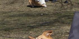 Caras de perros divertidas