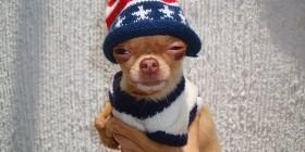 Chihuahua de lunes