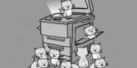 Copia de gatitos