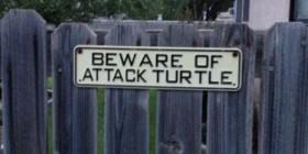 Cuidado con la tortuga