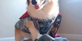 Disfraces perrunos: Thor