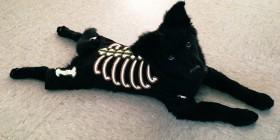 Disfraz de Halloween para tu perro