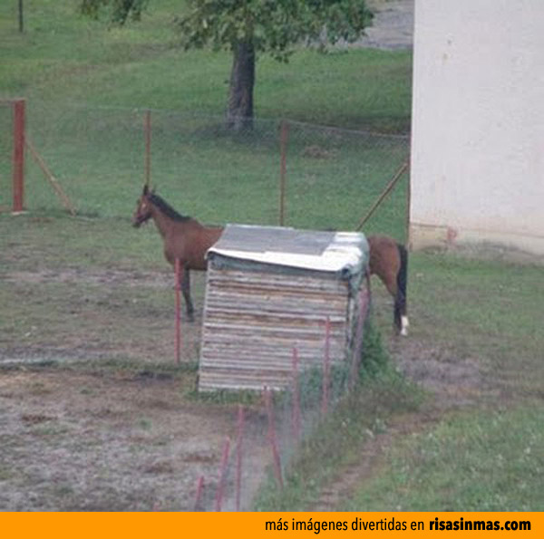 El caballo de Mr. Fantástico