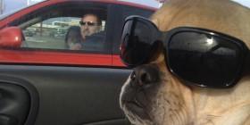 El perro más chulo