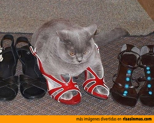 Eligiendo zapatos para salir