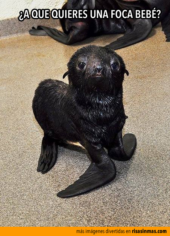 ¿A que quieres una foca bebé?