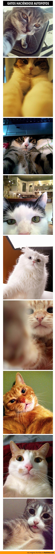 Gatos haciéndose autofotos