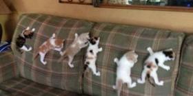 Gatitos entrenando