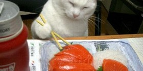 Gato comiendo sushi