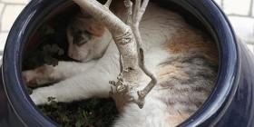 Gato durmiendo en una maceta