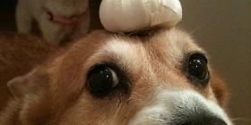 Hazel sosteniendo unos ajos