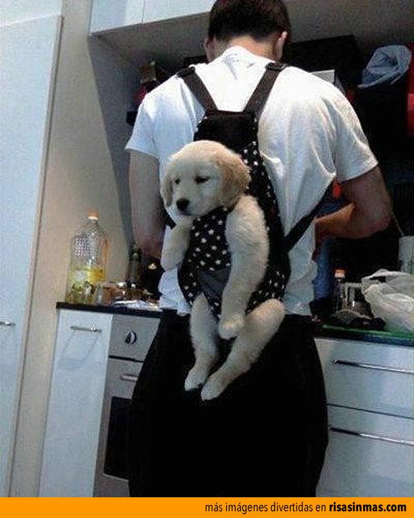 La mejor forma de controlar a tu cachorro