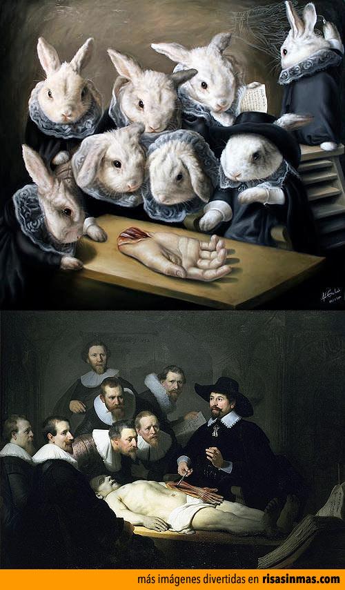 Lección de anatomía de conejos