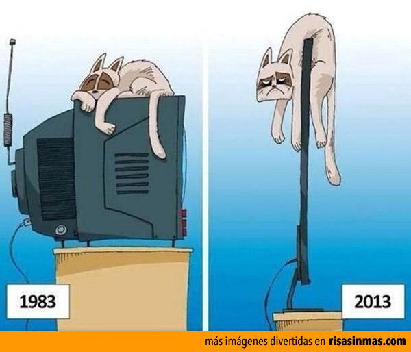 Los gatos y las televisiones