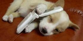 Los lunes cogiendo el móvil