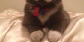 Mi gato bigotes