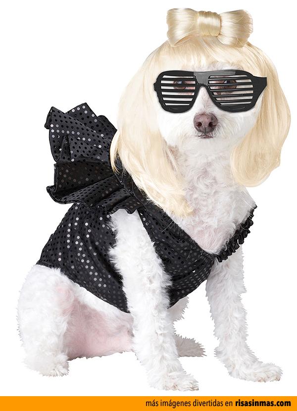 Mi perra es fan de Lady Gaga