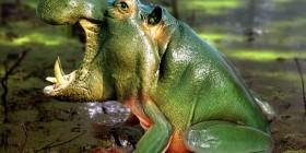 Nueva especie Rana-Hipopótamo
