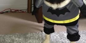 Nuevo superhéroe: Pugman