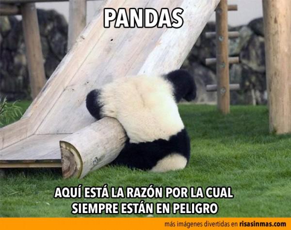 La razón por la que los pandas están en peligro