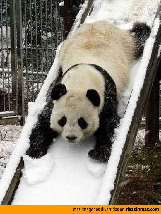 ¡Panda vaaaa!