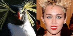 Parecidos razonables: Miley Cyrus