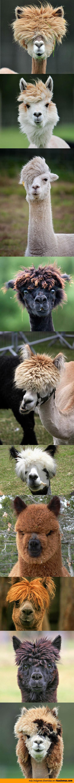 Peinados de Alpacas
