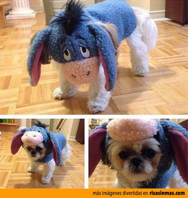 Perro disfrazado de Igor
