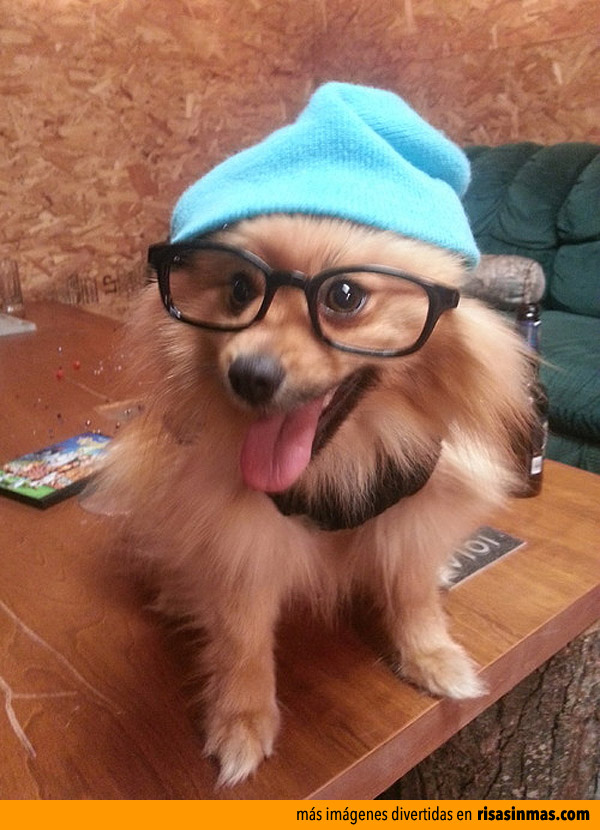 Perro hipster