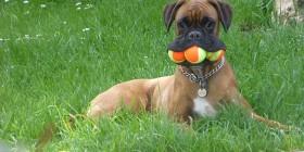 Perros recogepelotas en Roland Garros