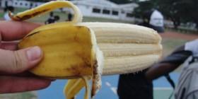 Plátano mutante