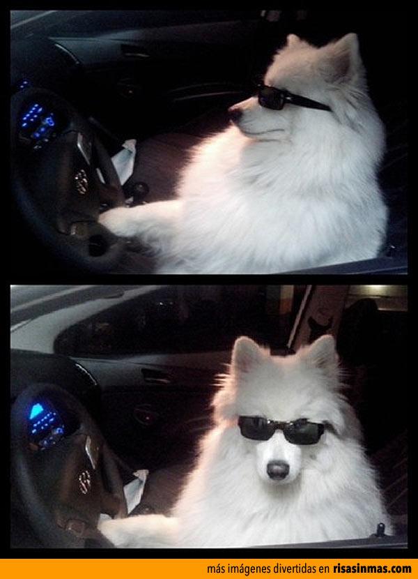 Policía, me han robado mi coche y mi perro